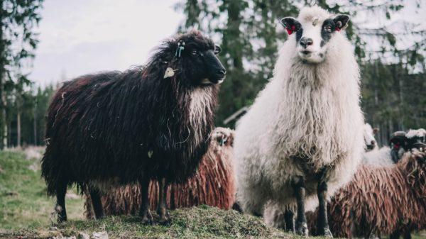 【黒い羊】インテル移籍の裏側をエリクセン本人が語る